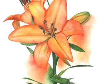 Lily Original watercolour painting OL0916 - Original botanical art - Flower original watercolour painting