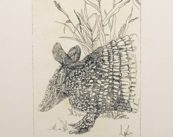 Armadillo - giclee print from original etching