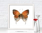 Orange Brown BUTTERFLY Painting, Butterfly Art, Butterfly Print, Southwestern Butterfly Art, Butterfly Greeting Cards, 47 Mantoides Gama