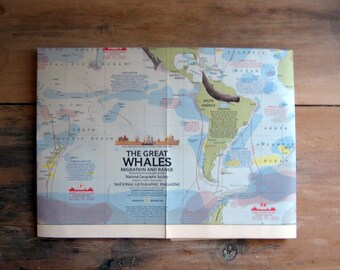 Vintage The Great Whales Migration Map, Whales of the World