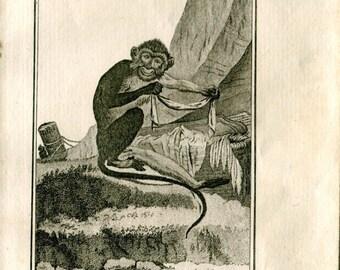 1800s Antique Animal Print Monkey Talapoin French Engraving Buffon Ape Primate