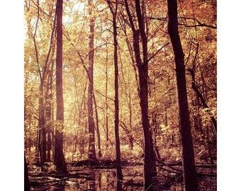 Autumn Forest photograph / fall trees art print /golden orange sunlight and orange leaves