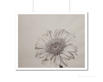 Floral Photography | Nature Wall Art | Flower Decor | Dreamy Art | Gerbera Daisy | Macro Flower Photograph | Black and White