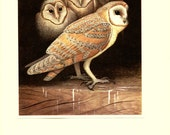 1959 Vintage barn owl print Vintage bird illustration Barn owl art Vintage owl decor Tyto alba Owl decor Vintage bird decor Owl gift