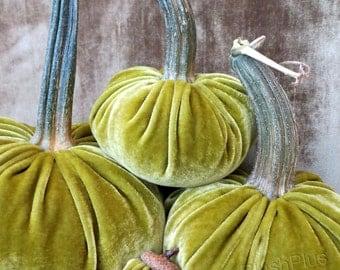 Velvet PUMPKINS & Velvet ACORNS - Real Pumpkin Stems and Real Acorn Caps - Shimmery Olive Green