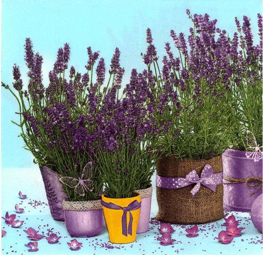 4 Decoupage Paper Napkins Lavender Flower Pots Lavender
