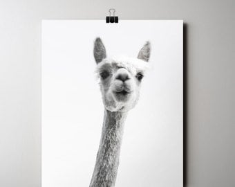 Alpaca Print, Animal Poster, Llama Print, INSTANT DOWNLOAD, Black and White Photography, 16 x 20 Poster, Printable Art,  Funny Printable Art