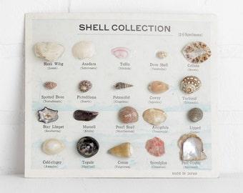Vintage Shell Collection, Seashells on Cardboard Backing, Nautical Home Decor, Specimen Kit, Biology Earth Science