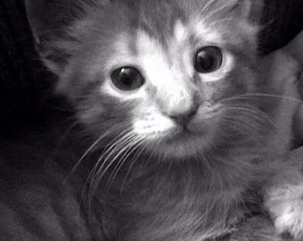 Black and White Kitten Photograph