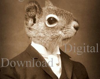 Mr. Squirrel Digital Download Photo