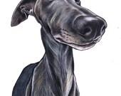 Custom pet portrait, drawing, art, dog, cat, colour pencil wall art, draw my pet, custom portrait, bespoke dog gift, commission, pet artist