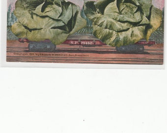 1910 Antique Postcard,Exaggerated Heads Of Cabbage On A Flat Railroad Car, Unused