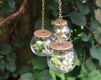 Botanical Mobile - real lichen and moss terraruims.
