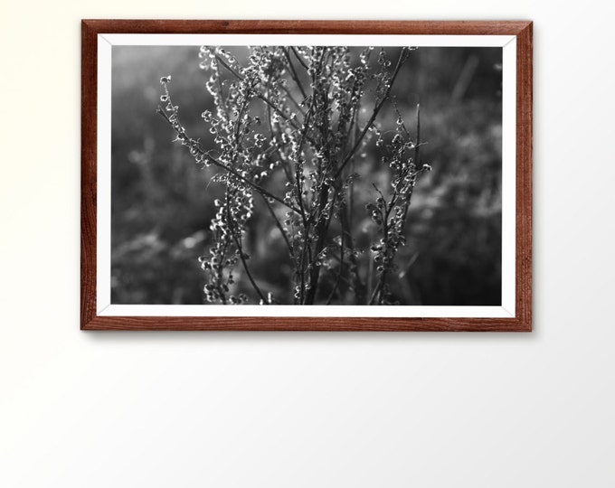 Printable wall art Digital Download Black and white art Plant Photo Nature photography Wall Art Summer Photo Macro Photo Living Room Decor