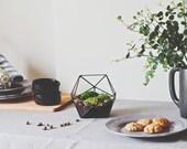 Geometric Glass Terrarium / Icosahedron / Handmade Glass Candle Holder / Modern Planter for Indoor Gardening / Stained Glass Terrarium