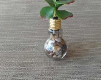 Succulent in a light bulb