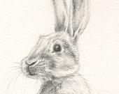 114 Tiny Rabbit gift card