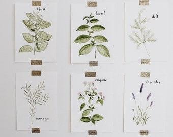 Watercolor Herbs Set
