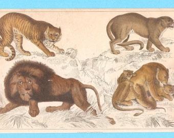 Antique animal (Big cats, tiger, lions, puma or cougar) illustration
