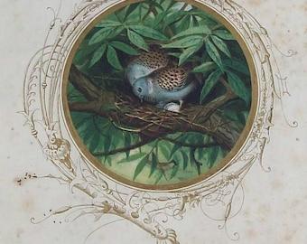 Antique Turtle Dove Illustration