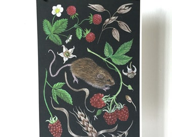 Harvest mouse A4 giclee print