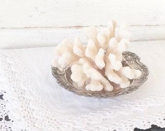 White Sea Coral