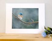 14x11 Bluebird Bird Wall Art with White Mat - Ready to Frame Bird Print from Original Acrylic Painting