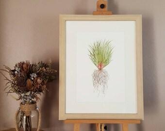 Iris Grass Print | Watercolour Botanical Illustration (print only)
