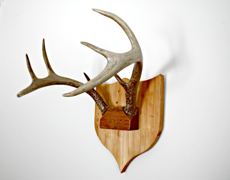 Vintage Mounted Deer Antlers Real Deer Antlers Wall Hanging