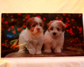 Coton de Tulear Puppies Card