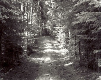 Wooded Path Print