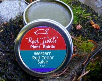 Western Red Cedar Salve 1 oz (Thuja plicata)