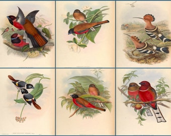 A set of six Bird prints from 1800's. Prints 7,8,9,10,11,12