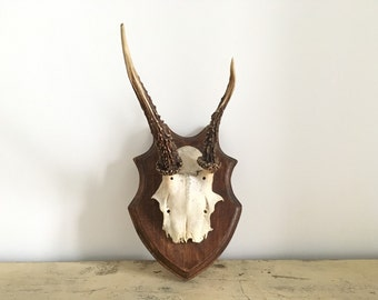 Old hunting trophy, wood deer.
