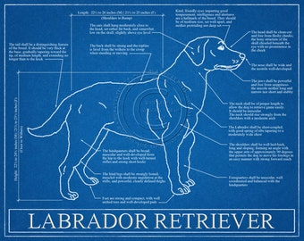 Labrador Retriever Blueprint Elevation / Labrador Retriever Art / Labrador Retriever Wall Art / Labrador Retriever Gift