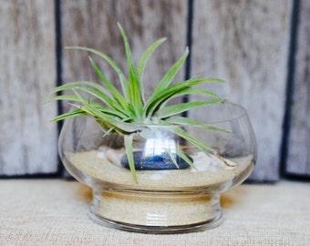 DIY Terrarium Kit, Air plant terrarium, DIY gift air plant terrarium, Christmas gift, favours & bombonieres