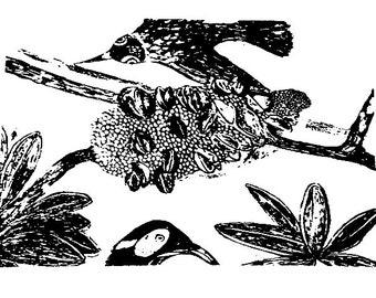 Birdsong/linen/ teatowel/Banksia/Honeyeater/Australian/Native/Plants