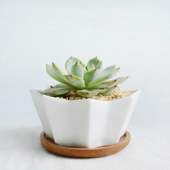 White Geometric Pattern Ceramic Succulent Planter By