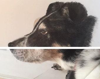 Custom Pet Portrait, Custom Dog Portrait, Custom Cat Portrait, Dog Portrait, Cat Portrait, Pet Portrait, Custom Dog Art, Custom Cat Art