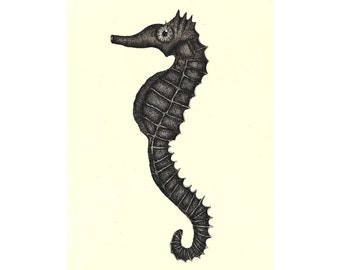 "Sea horse illustration // Postcard sized - A6, 4.1"" x 5.8"""