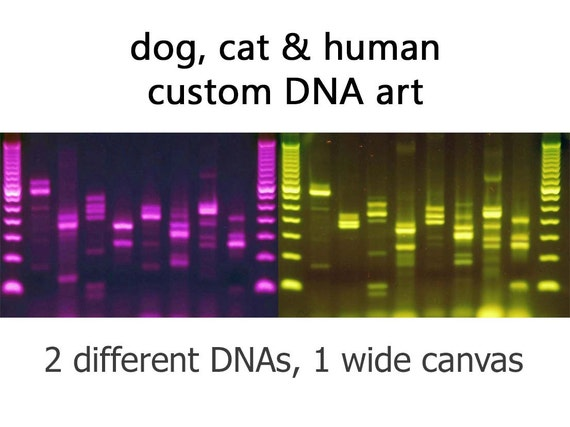 Dna dogs cats humans custom canvas metal science wall art for Personalized dna art