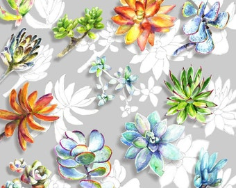 Watercolour & Pencil Succulent Clip Art set 4- Hand Painted and Hand Drawn Graphics, printable cliparts