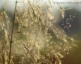 Grass Macro Photography Flower Photography Nature Photography Digital Photo Download Home decor Wall decor Wall Art