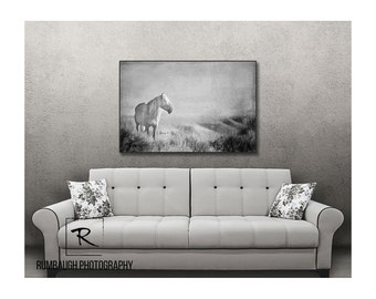 Wild horse art- 'Day Dreamer'.  Corona,  a wild horse and band stallion on Canvas with black frame.