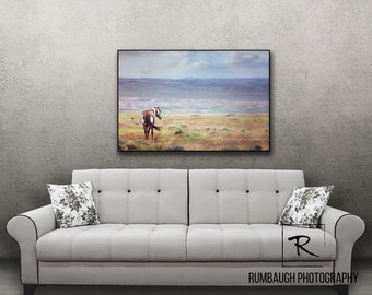 "Wild Horse Art-Canvas ~ ""Picasso at Peace"" ~ Wild horses of Sandwash Basin"