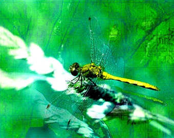 Dragonfly Wall Art,Large Green Dragonfly Picture,Green,Yellow Dragonfly Photograph,Topographical Photo,Yellow Dragonfly,Fantasy,Fairy Tale