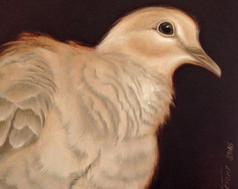 "Original signed oil painting on MDF, ""Unrequited Love"" Collared Dove"
