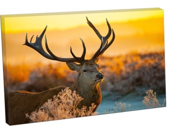 FO0313 Print On Canvas Red Deer morning Sun Wildlife Art Landscape