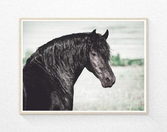 Horse Print, Black Horse Photo, Western Decor, Equine Prints, Horse Decor, Horse Wall Art, Equestrian, Printable Art, Modern Minimal Photo