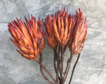 Dried Protea Repens Flowers, Dried Flowers, Wedding flowers, Home decor